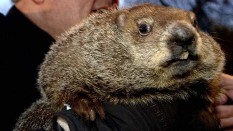 Groundhog Day: A History