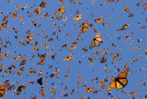 The Swarms of Butterflies are a Sight to Behold